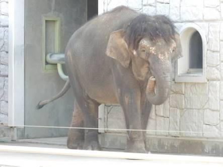 1人動物園はおかしい人ですか?