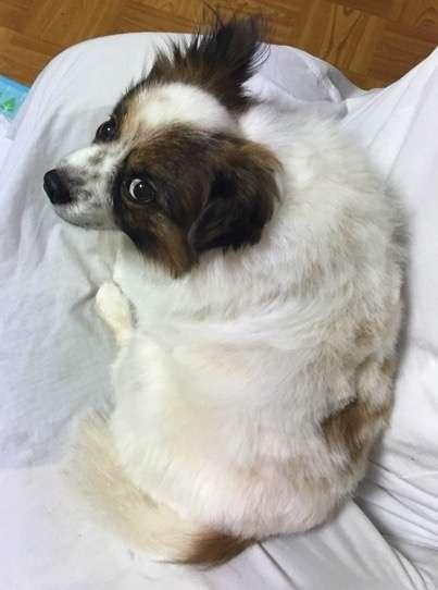 ペットに話しかけてみて反応を教えてください!