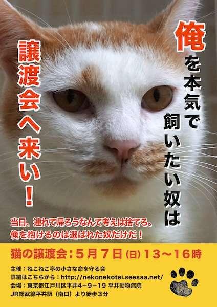 「俺を抱けるのは選ばれた奴だけだ!」猫がキリリと告げる猫譲渡会ポスターが話題
