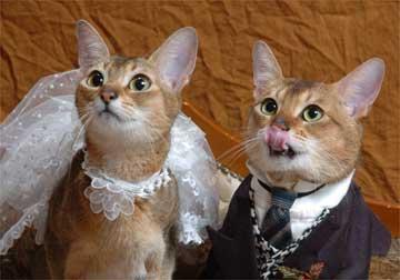 少人数の結婚式を挙げた方