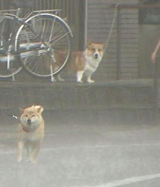 梅雨時期の犬の散歩について