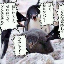 ピース綾部祐二、早くも帰国!?「日本にいるしw」
