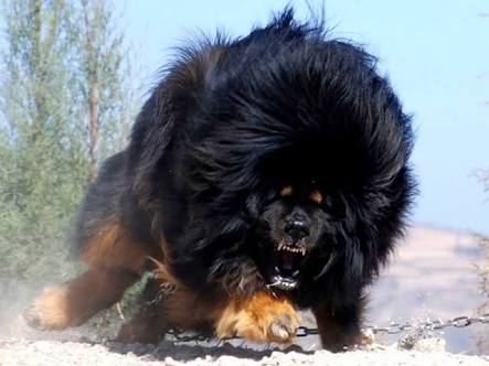 マイナーな犬種を語りましょう!