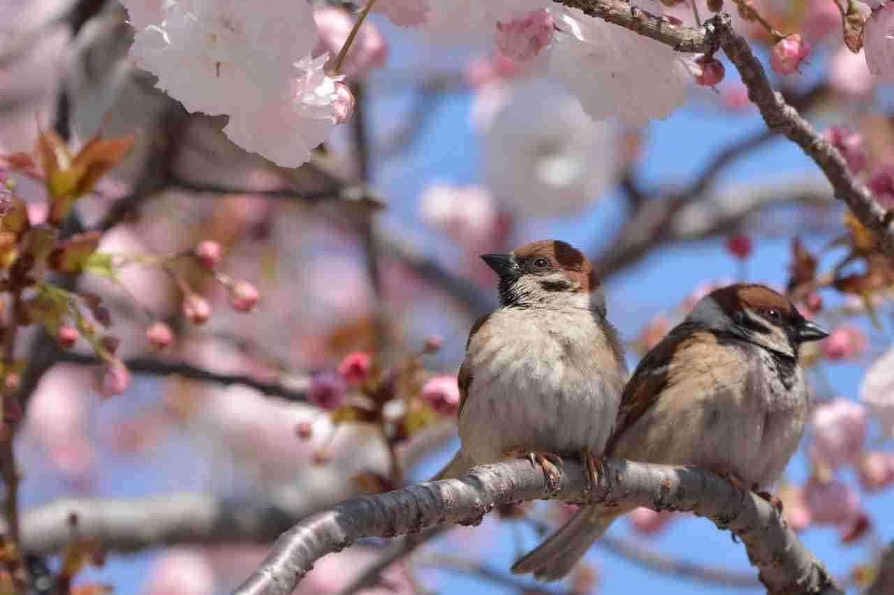 鳥が好きな人!