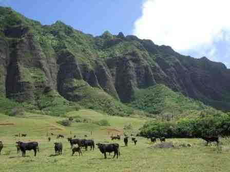 ハワイの魅力を語ろう!