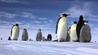 すごアラブ。水不足解消の為、南極から氷山を引っ張ってくるという壮大な計画が来年スタート(アラブ首長国連邦)
