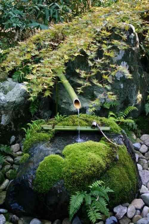 【苔・コケ・こけ】いろいろな苔が見たいです(><)