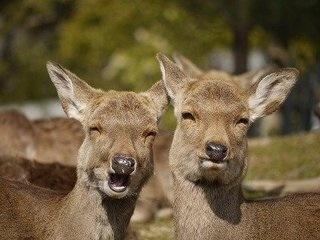 「鹿男あをによし」を語りたい