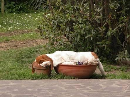 そこで眠るの?な動物画像が集まるトピ