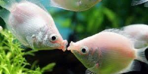 お魚を、飼いたい