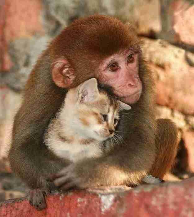 【画像】甘えん坊な動物達