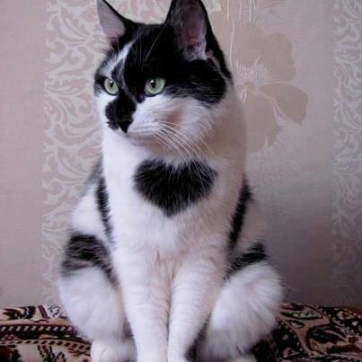 どんな猫が好きですか?