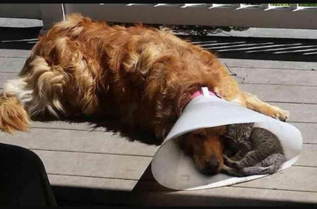 犬と猫、飼っている人集まれ!