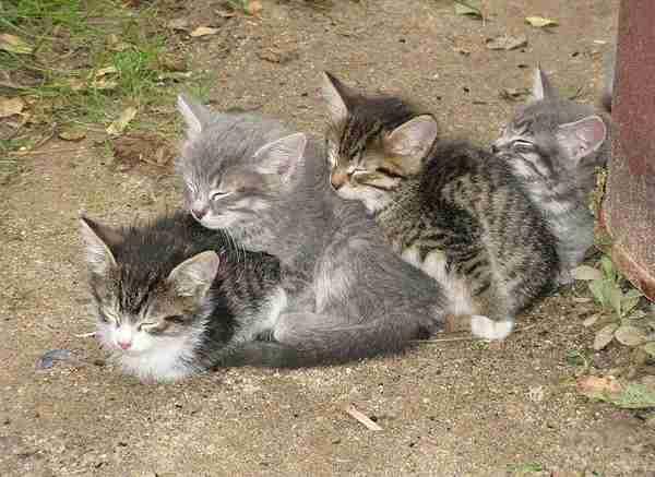 寝相の悪い動物達