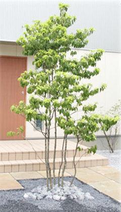 庭に木を植えてる方☆