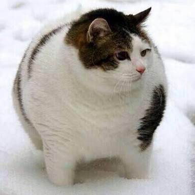 ペットの体重管理してますか?