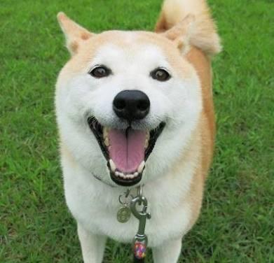 犬の世界にガルちゃんがあったら立ちそうなトピ