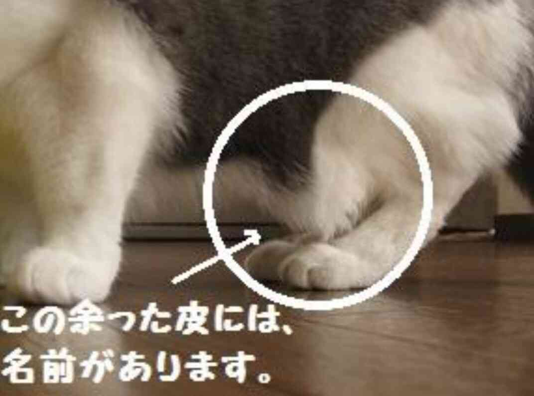 猫好きあるある