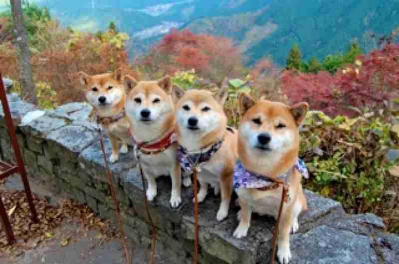 動物で女の子アイドルグループを作るトピ