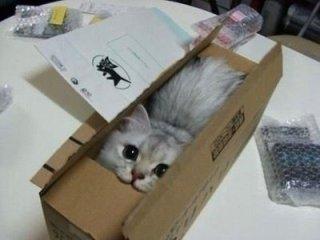 猫が喜ぶこと教えて下さい