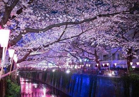 超満員のバス、消えゆく情緒…急増する訪日客に京都苦悩