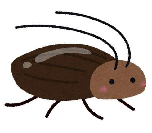 ゴキブリへの恐怖を克服する9の方法