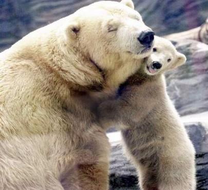 表情豊かな動物