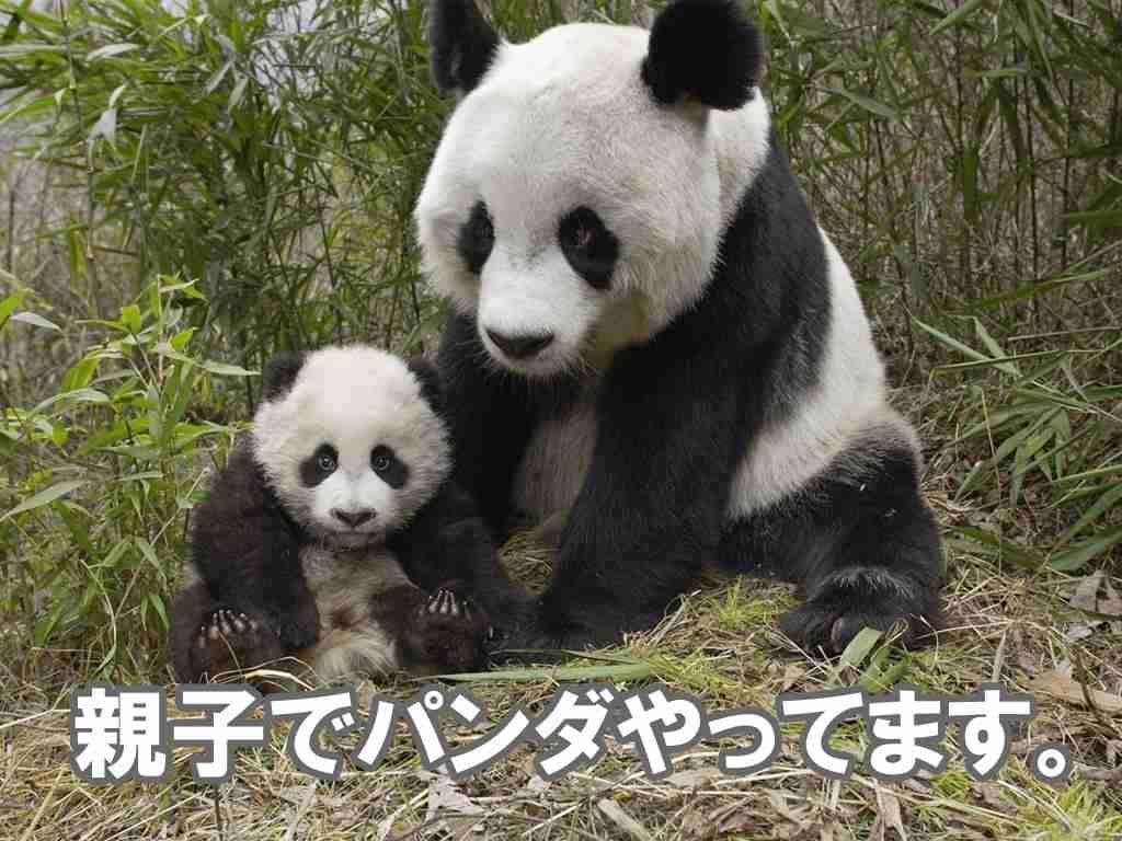 上野のパンダの名前を考えるトピ