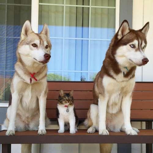 """ネコが『イヌ化』するって本当?増加する""""犬っぽい猫""""の真相"""