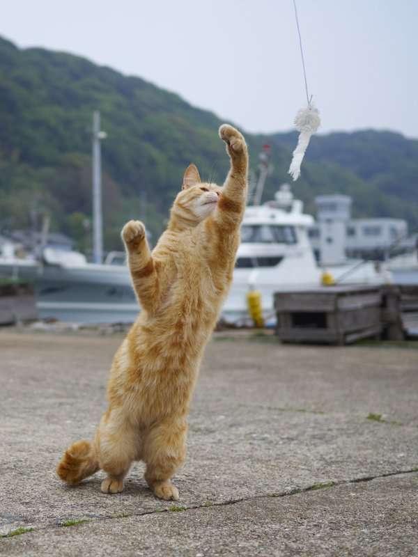 【鹿児島】ネコカフェ「猫之坊」の経営者が行方不明になり、店内にはネコ達が放置され悲惨な状況に。