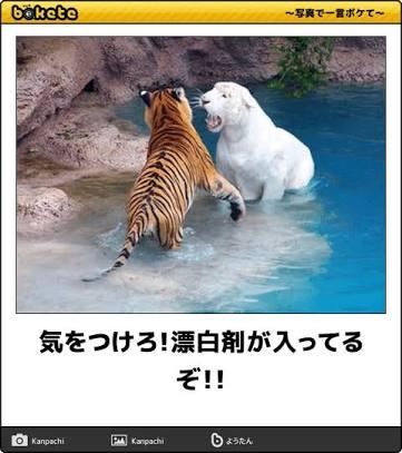動物限定のボケてを貼って行きましょう!