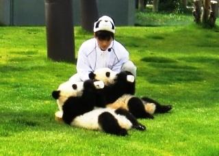 パンダ、和歌山でバンバン誕生 上野の赤ちゃん、騒ぎすぎでは?