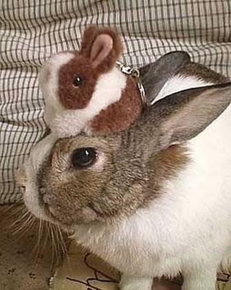 動物の頭に何か乗っている画像