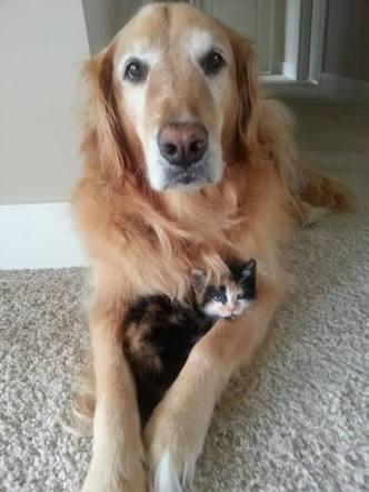 犬と猫をどっちも飼ってる人が、両者に玩具を与えた時の反応の違いw