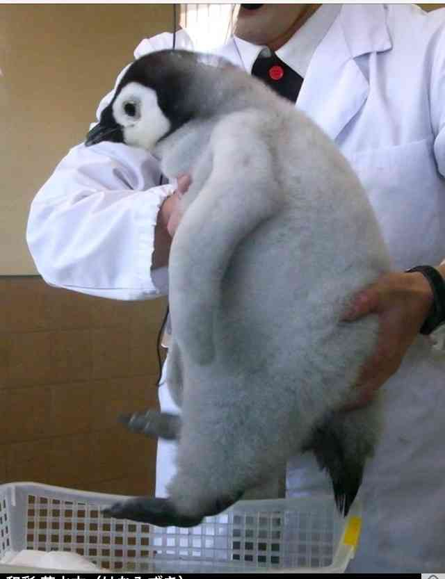 電通が「肯定ペンギン」を商標出願し困惑広がる「『肯定ペンギンのあかちゃん』を電通がパクった」といった誤解も