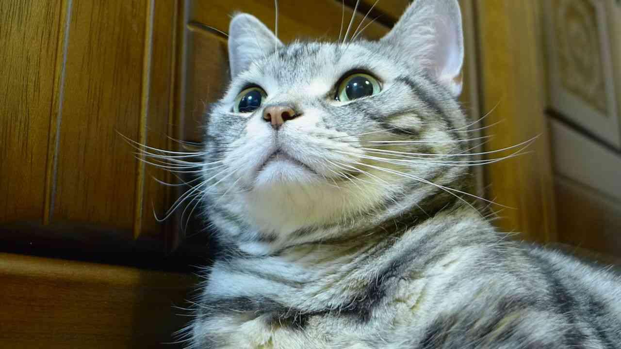 猫につけたい名前