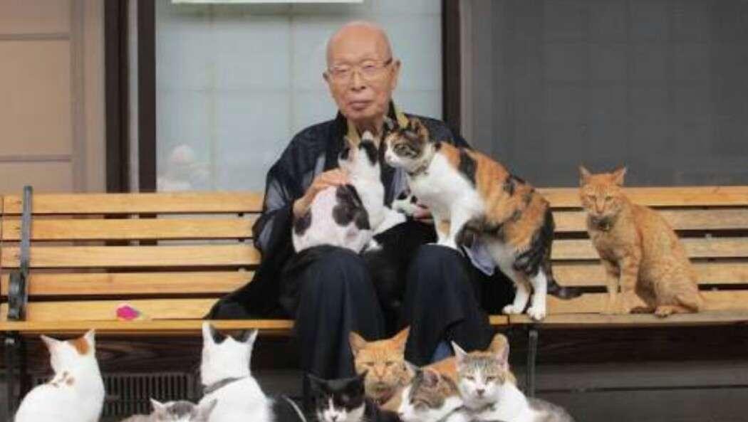 『高野山』は昔、猫の立ち入りが禁止されていた…その理由が「分かる、分かりすぎる!」