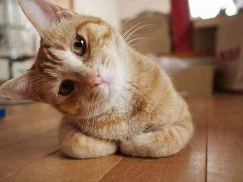 【動画】「猫が背中の上でケンカを始めたんだけど…どうしよう?」