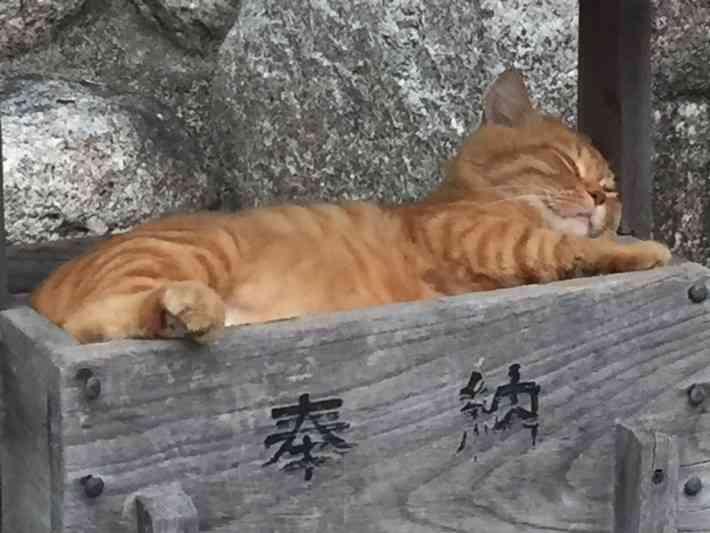 動物の寝顔でお休みなさい