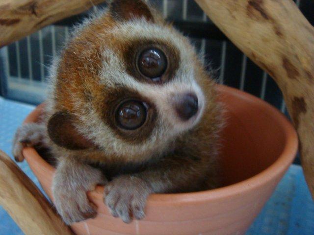見た目は可愛いけど実は怖い動物