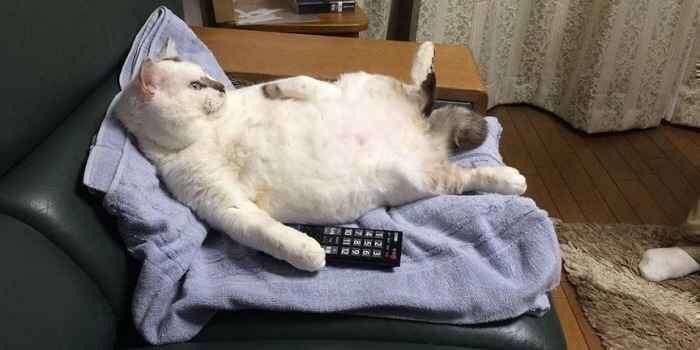 猫のお留守番