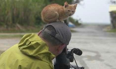 猫が跳ぶ、寝転がる!「岩合光昭の世界ネコ歩き」劇場版の写真解禁