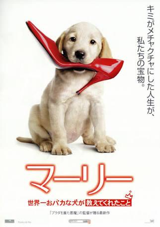 犬の安楽死について