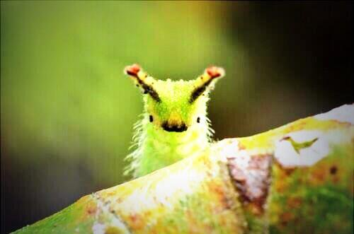 【閲覧注意?】なんでゴキブリ苦手なんですか。
