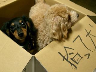 捨て犬への対処