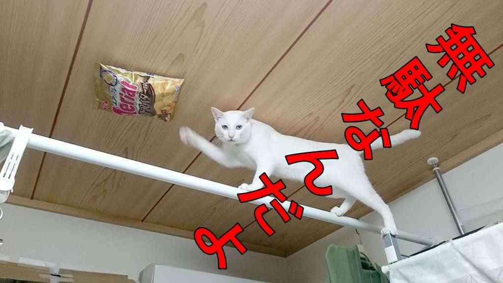 菓子袋を吊るされて悪さを封じられた猫 飽くなき執念と驚異の身体能力をみせつける