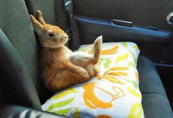 後部座席のシートベルト未着用 新車に警告装置を義務づけ