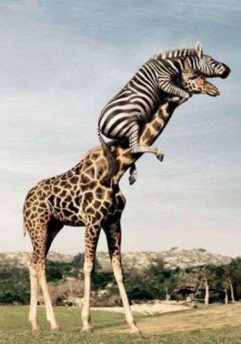 動物でホストクラブを作るトピPart2