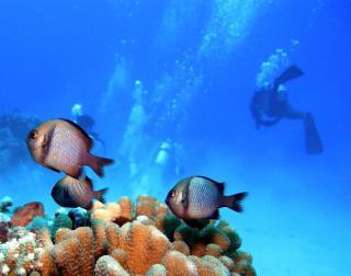 ダイビングにオススメの海!