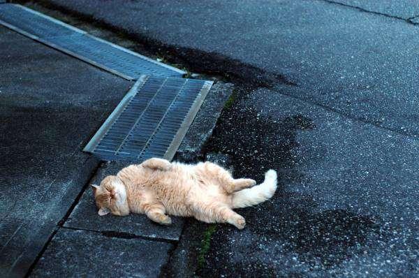 猫になったらやってみたい事。